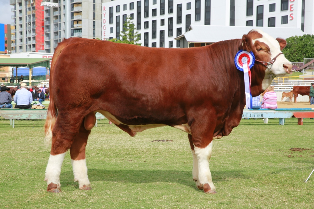 10 straws of Poll Lethal Weapon genetics sold for $3600